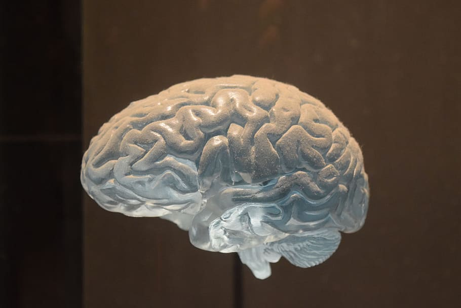 Photo of the human brain in action