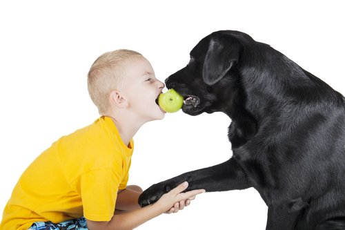 A child and a dog bite an Apple on white background