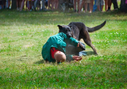 Dangerous dog attack exercises.